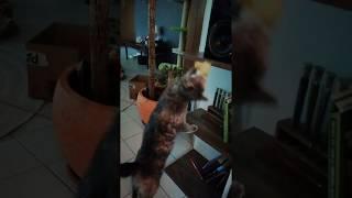 Кішка ловила свою іграшку 3/3
