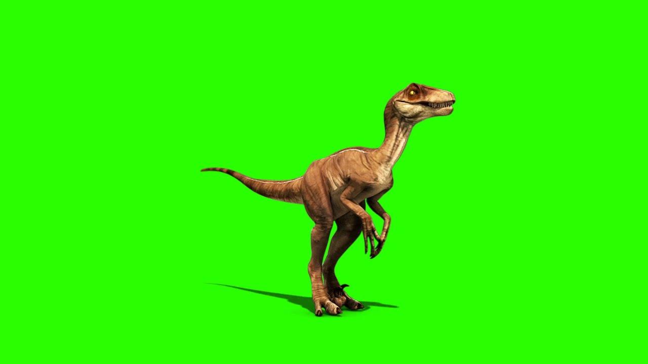 Green Screen Dinosaurs Velociraptor Prehistory Footage