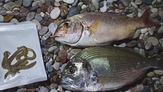 Çin Kurdu -  Balık Yemi ile  Muhteşem Balık avı