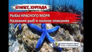 ЕГИПЕТ 2020 ОТДЫХ В ХУРГАДЕ Рыбы Красного моря с названиями и описанием