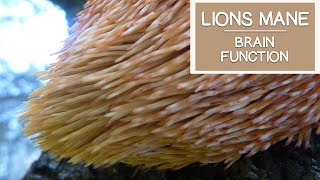 Lions Mane Mushroom, May Help Stimulate and Improve Brain Function
