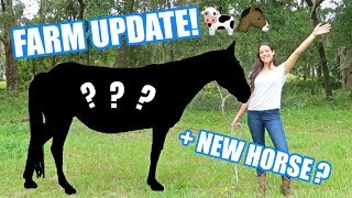 MEET OUR NEW HORSE! | Farm & Life UPDATE!