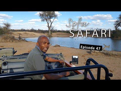 Sofa Safari Episode 47: WILD DOGS and BLOOPERS!