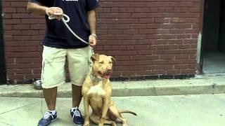 Queens Ny Dog Training - Testimonial - Manish
