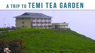 Gambar cover A Trip to Temi Tea Garden
