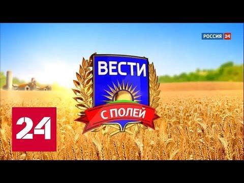"""""""Вести с полей"""": воронежское мясо"""