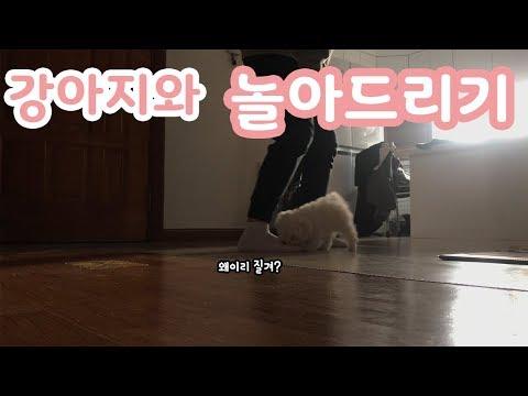 몽실아빠랑 재미나게 노는 아기 강아지 몽실이 / dog tv 비숑프리제 귀여운 영상