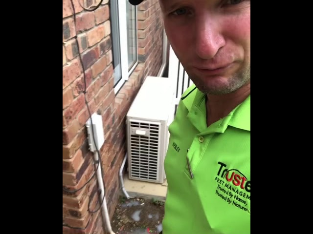 Termidor injection into a Term-X reticulation system