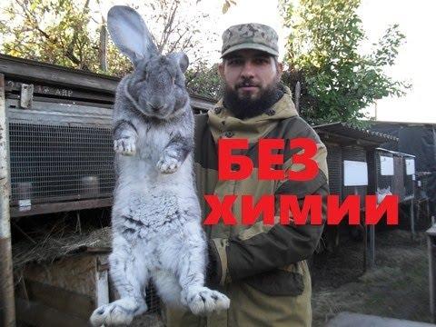 Разведение кроликов. Личный опыт.
