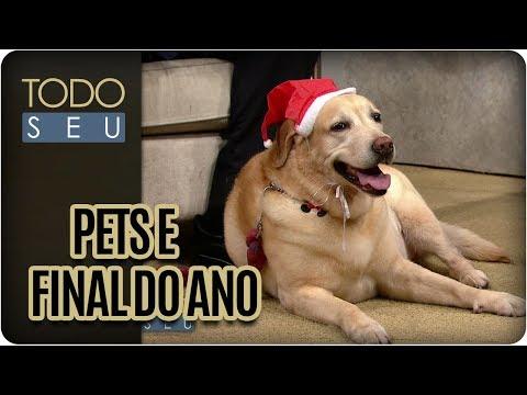 Dicas Para Diminuir Estresse Do Pet Nas Festas De Final De Ano - Todo Seu (21/12/17)