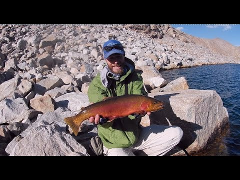 Fly Fishing For Golden Trout In Wyoming.