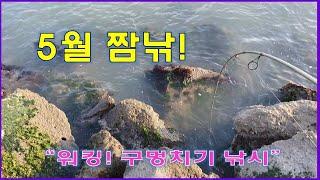 5월 구멍치기 낚시 /  짬낚/  얕은 돌 틈 구멍 낚시 / 돌 틈에 낀 물고기  빼다가.../ 워킹낚시