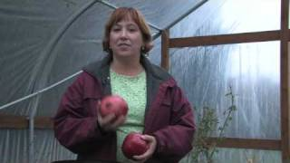 Gardening for Trees & Plants : About Pomegranates Growing Conditions