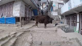 Namche Bazar  - Heart of Khumbu Region and Everest Base Camp Trek