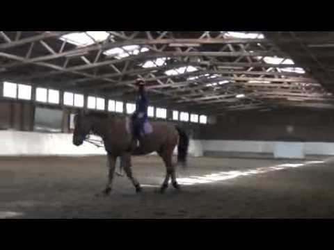Equitation, Sports Universitaires de Genève