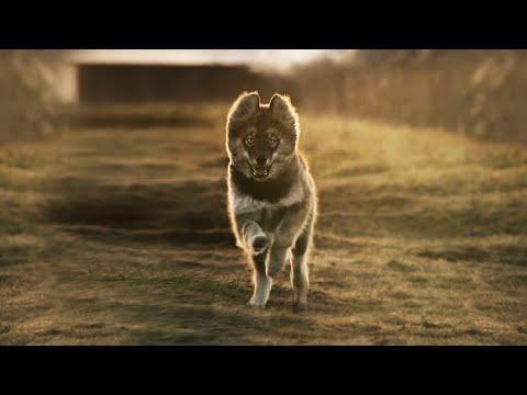 LEGEND OF DOG | TOGO Epic Cinematic