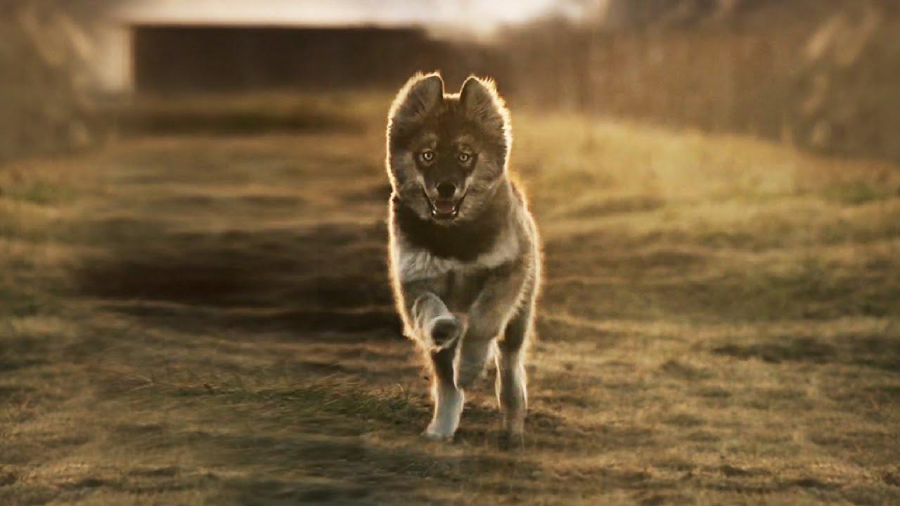 Download LEGEND OF DOG | TOGO Epic Cinematic