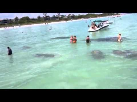 Ride with the dolphins at sanibel fort myers beach fl for Pelican motors fort myers florida