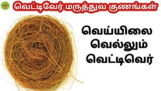 Vettiver (Citronella) Benefits in Tamil | வெட்டிவேர்றின் மருத்துவ பலன்கள் | 7am Suvai