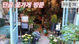 경칩 맞이 동네 꽃가게 출동역시 식물 쇼핑은 행복해