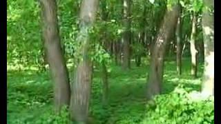 Что нашёптывает лес?