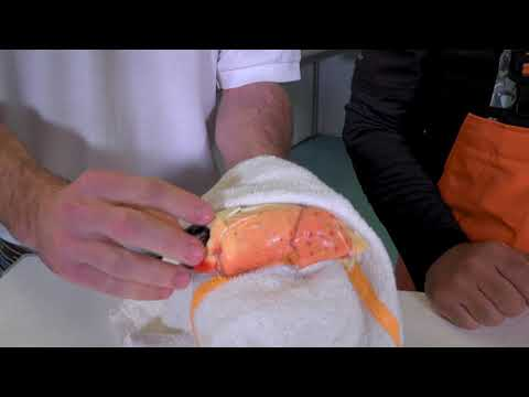 How to Crack a Stone Crab Claw at Cod & Capers Seafood