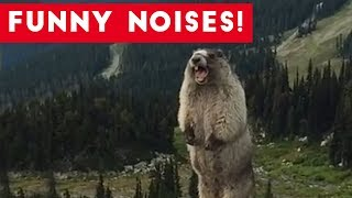 Cutest Funny Animal Sounds Compilation of 2017 | Funny Pet Videos