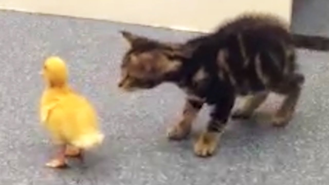 Kittens Do Things For The First Time