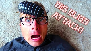 Giant Bugs Invade Our House!
