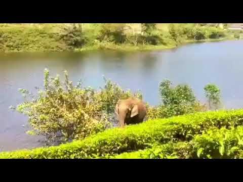 Megamalai Theni-Best tourist palce in Tamilnadu-Better than Kerala