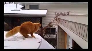 2014'ün En Çok İzlenen 10 Komik Kedi Videosu
