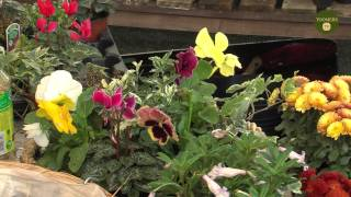 Winter Hanging Baskets & Frost Prevention