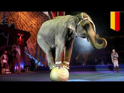 Elephant escapes from circus, kills man in Germany - TomoNews