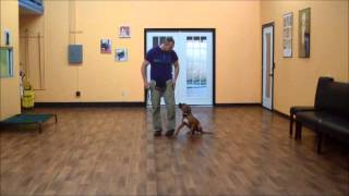 San Antonio Dog Training Co. Bentley