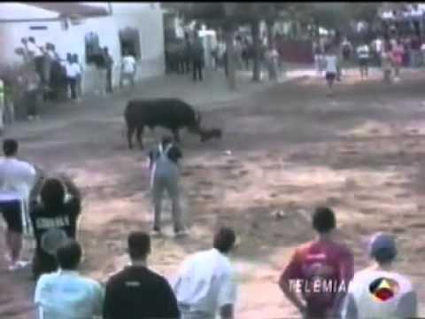 bull terrier vs toro bravo - YouTube.flv