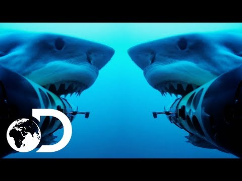 Shark Cam Gets Attacked By Jaws Of The Deep   Shark Cams Strikes Back   SHARK WEEK 2018