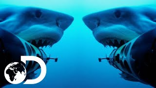Shark Cam Gets Attacked By Jaws Of The Deep | Shark Cams Strikes Back | SHARK WEEK 2018