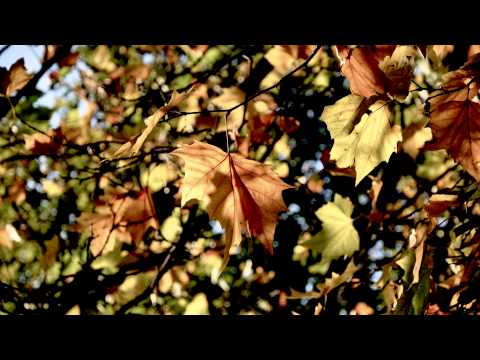 Tomaso Albinoni Adagio in G Minor  Giazotto BEST QUALITY HD 1080p