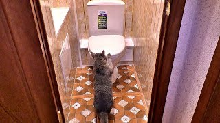 Установка дешёвого унитаза в туалете