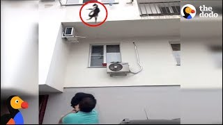 Man Catches Falling Cat With His Backpack | The Dodo