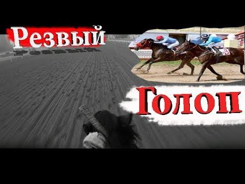 Утренняя тренировка скаковых лошадей /Резвый голоп на 1000 метров в 1.01 сек