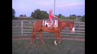 SOLD!  Good luck Angela!  Tuff Enough Review ☺ 2000 APHA Gelding