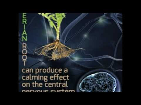 Valerian Root to Keep Anxiety Under Check With Superb Benefi