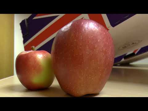Kent's orchards are producing giant apples
