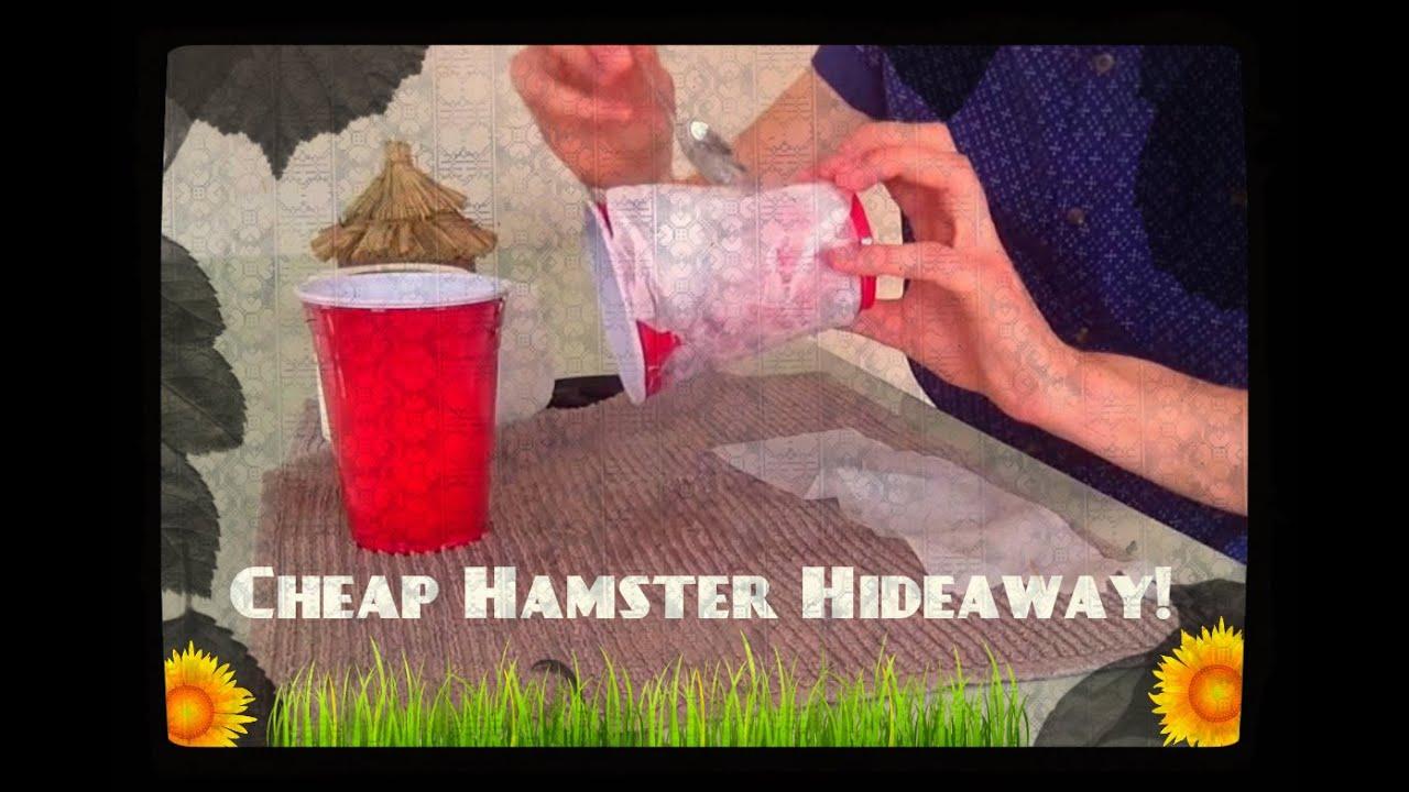 Make Homemade Hamster Toys 114