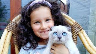 Необычные КОТЯТА и Шотландская Голубая Мама-КОШКА! Алис играет с КОТЯТАМИ! Видео Для детей ПРО КОТЯТ