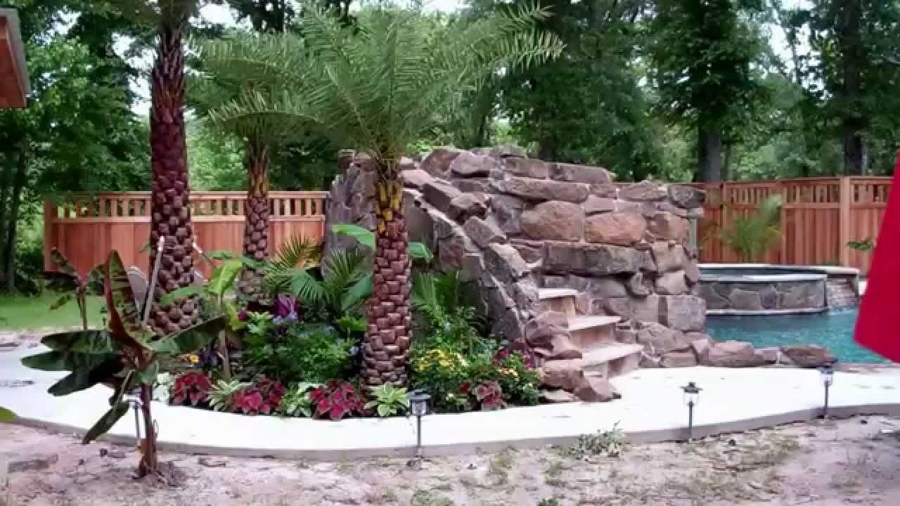 Palm Trees For Pools Houston Tx Austin Texas Dallas The