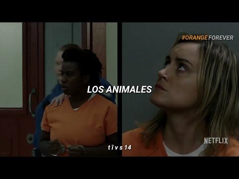 "You've Got Time// Regina Spektor (from ""Orange Is The New Black"")(Sub. Español)"