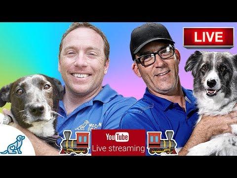 Dog Training Basics - Your Training Expectations - Professional Dog Training Tips