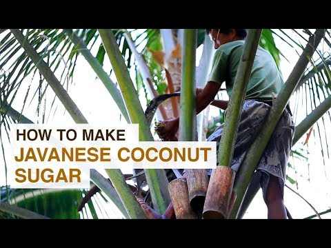 How To Make Organic Javanese Coconut Sugar
